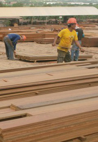 brazilian lumber mill