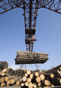 sawmill moving logs