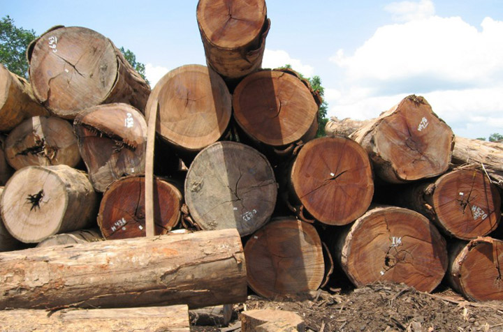 log pile of ipe wood